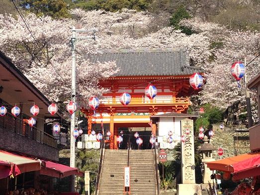 桜まつり(紀三井寺)2