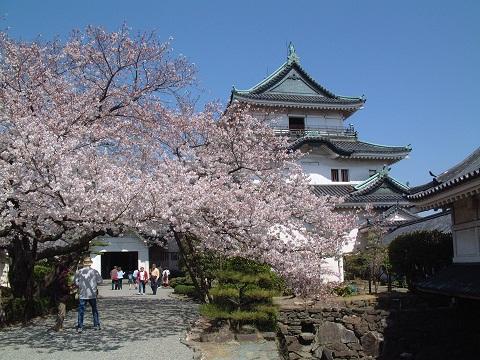 桜まつり(和歌山城)1