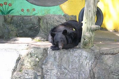 和歌山城動物園 (6)